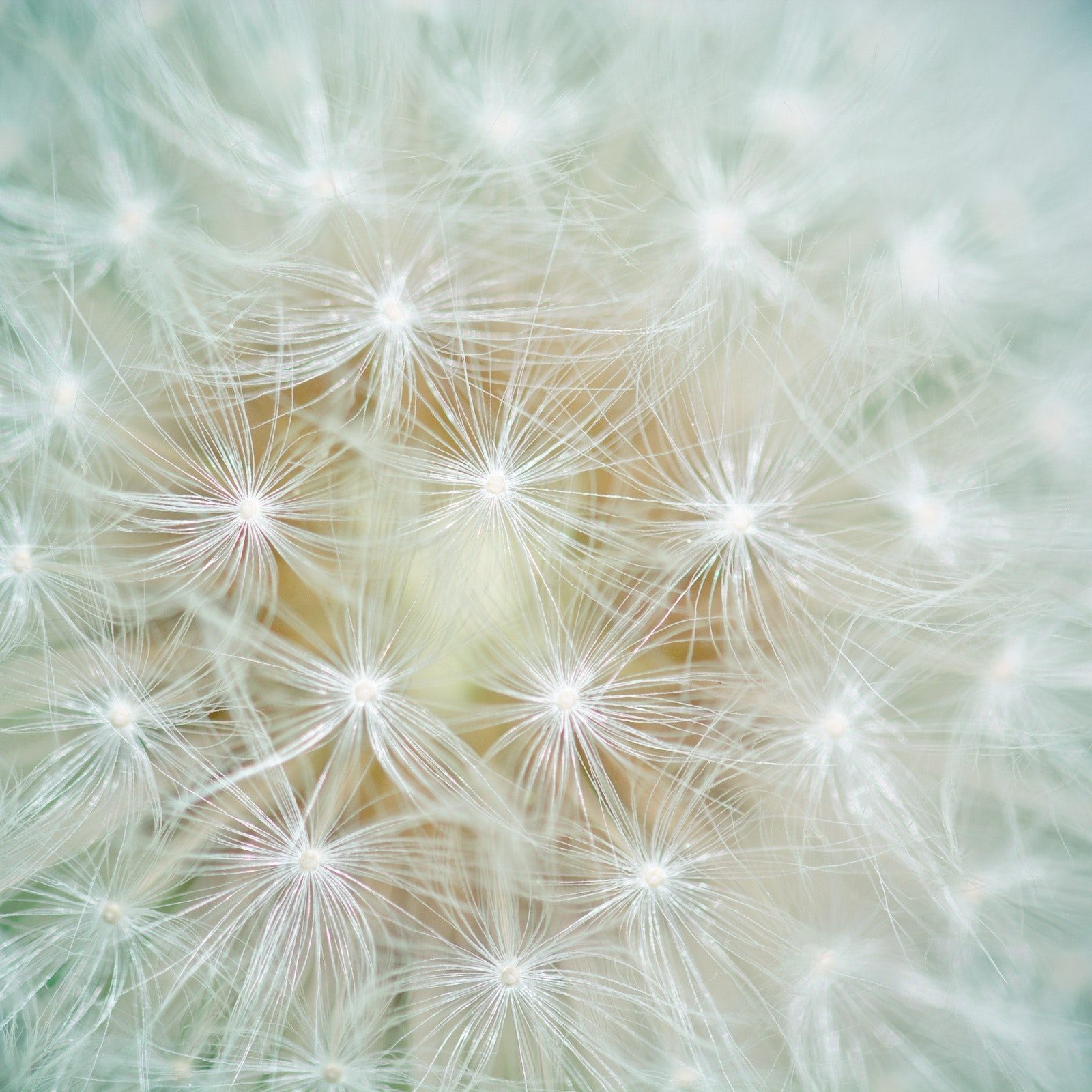 bloom-blossom-close-up-159056